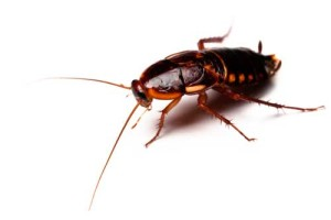 Kakkerlakken zorgen voor contractbreuk in Gents hotel