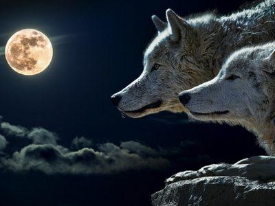 Pas op, de grote, boze geldwolf is terug in Nederland